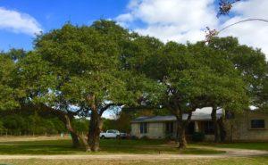 Photo of trees around house