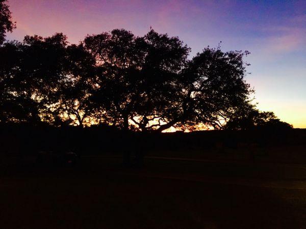 Tree Services in San Antonio, TX