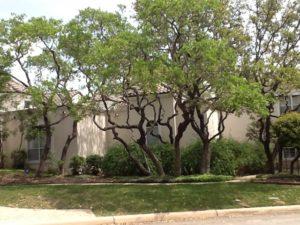 Tree Trimming San Antonio TX