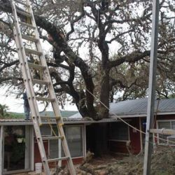Tree Removal in New Braunfels, TX